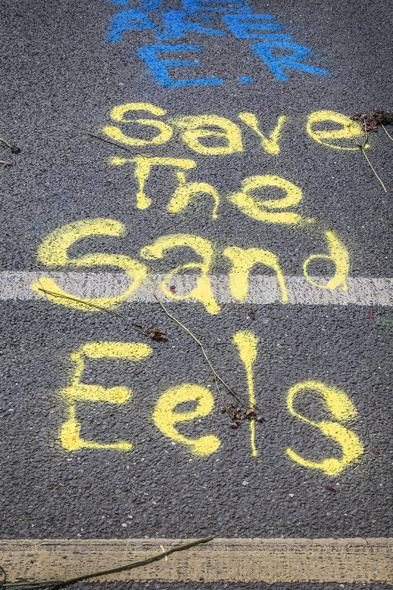SAVE THE SAND EELS